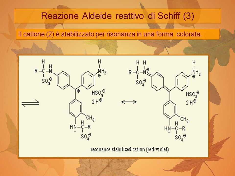 Reazione Aldeide reattivo di Schiff (3) Il catione (2) è stabilizzato per risonanza in una forma colorata.