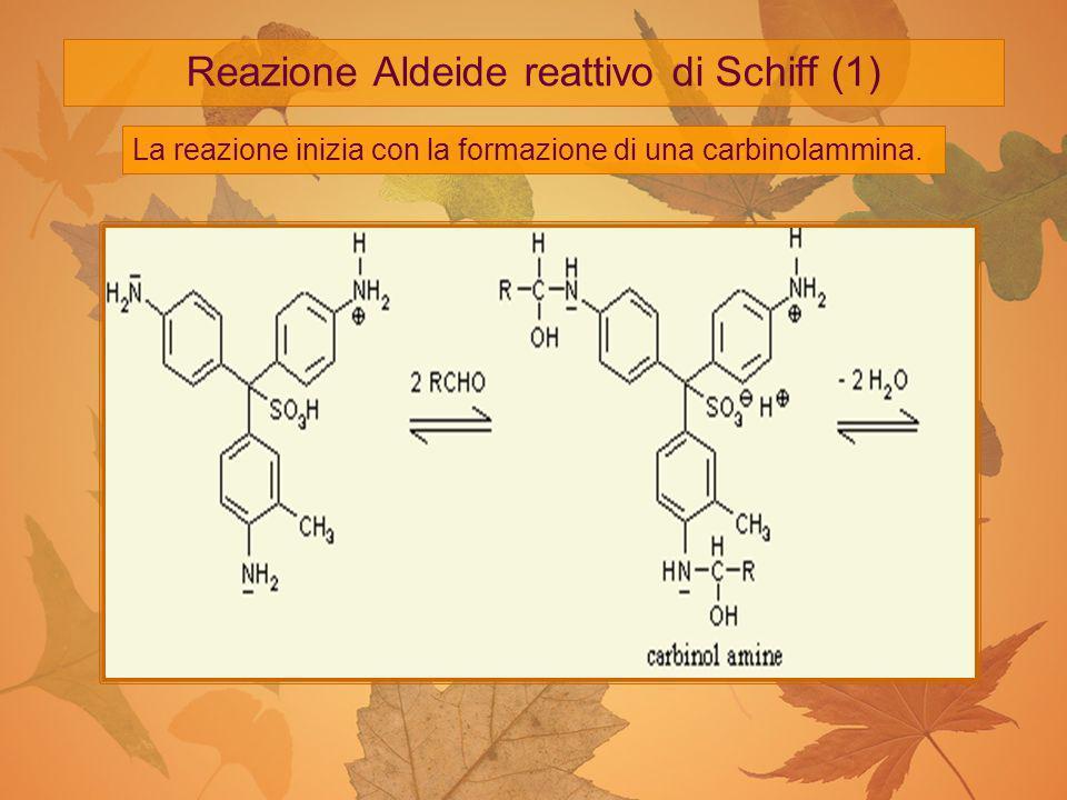 Reazione Aldeide reattivo di Schiff (2) La carbinolammina viene poi disidratata a Diimmina che reagisce con l Acido Solforoso per dare un catione (2)