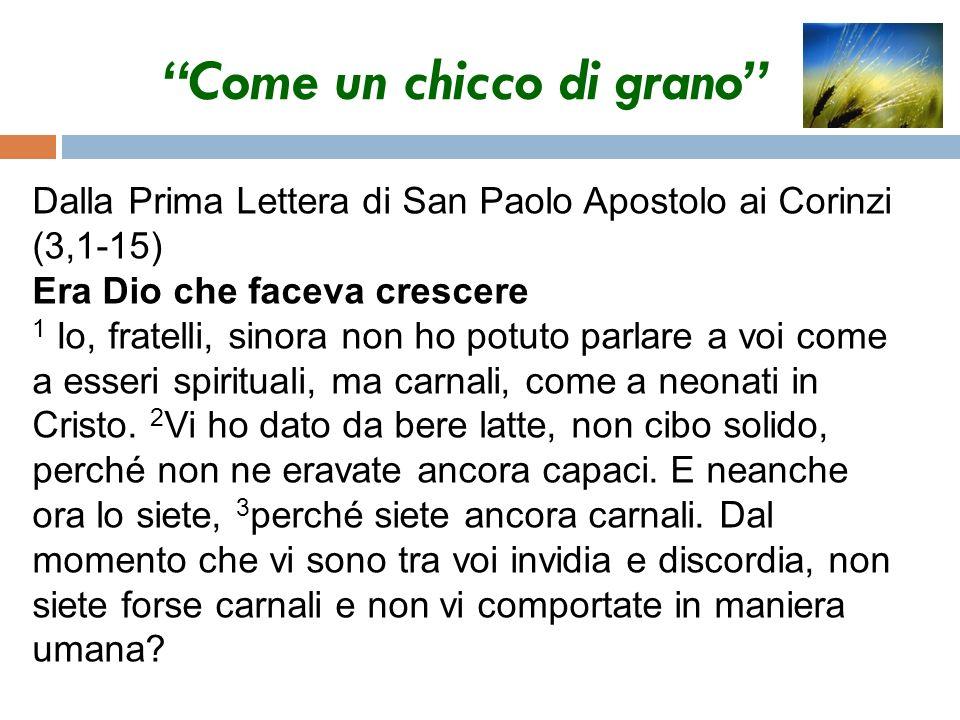 Come un chicco di grano 4 Quando uno dice: «Io sono di Paolo, e un altro: «Io sono di Apollo, non vi dimostrate semplicemente uomini.