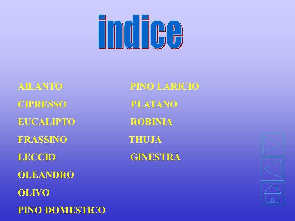OSSERVAZIONI SU ALCUNE SPECIE DI ALBERI E ARBUSTI PRESENTI NEL PARCO CALVARIO DI NICOLOSI. CLASSE 1A Anno SCOLASTICO 2001 - 2002 PROGETTO SET