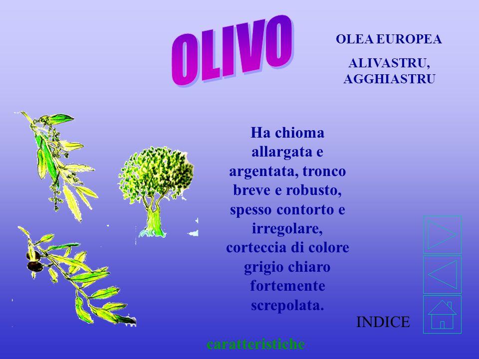 INDICE caratteristiche NERIUM OLEANDER Arbustivo e cespuglioso, raramente alberello, con rami flessibili e lunghi. Tronco piccolo e corto.