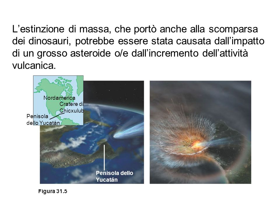 Figura 31.5 Nordamerica Cratere di Chicxulub Penisola dello Yucatán Penisola dello Yucatán Lestinzione di massa, che portò anche alla scomparsa dei di