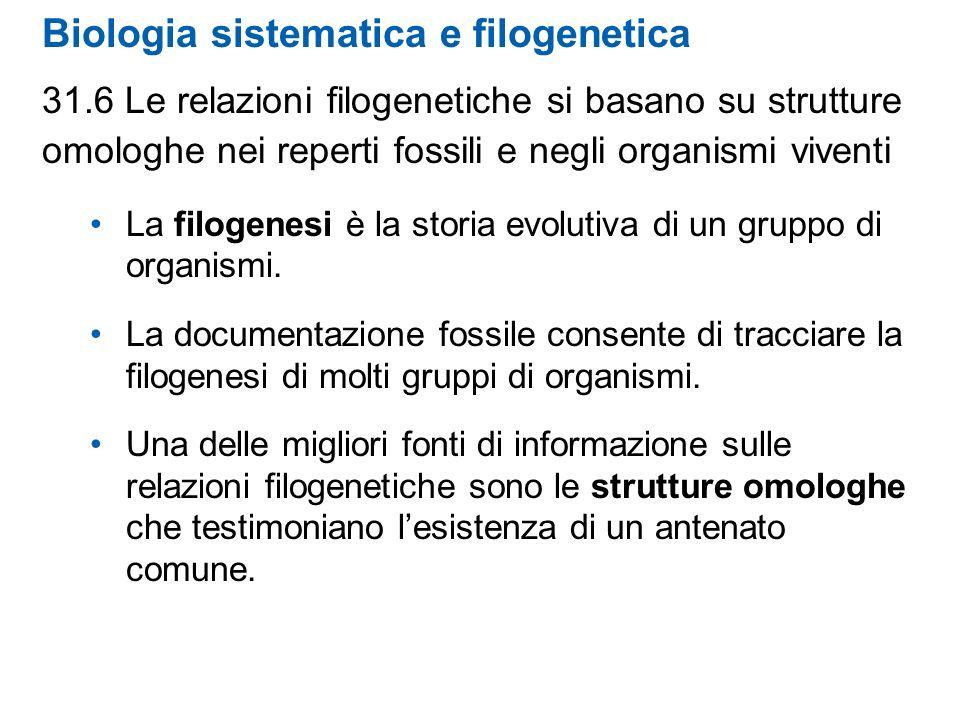 Biologia sistematica e filogenetica 31.6 Le relazioni filogenetiche si basano su strutture omologhe nei reperti fossili e negli organismi viventi La f