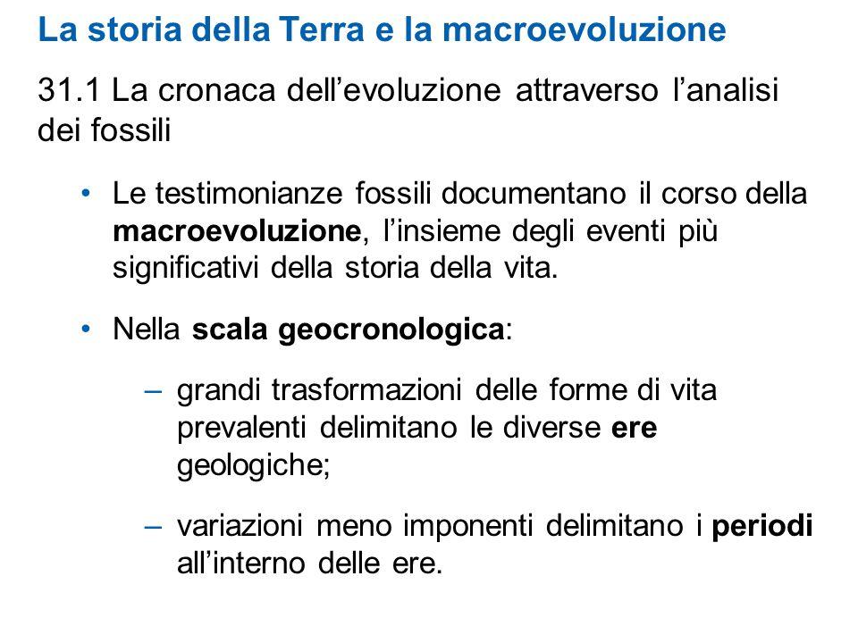 La storia della Terra e la macroevoluzione 31.1 La cronaca dellevoluzione attraverso lanalisi dei fossili Le testimonianze fossili documentano il cors