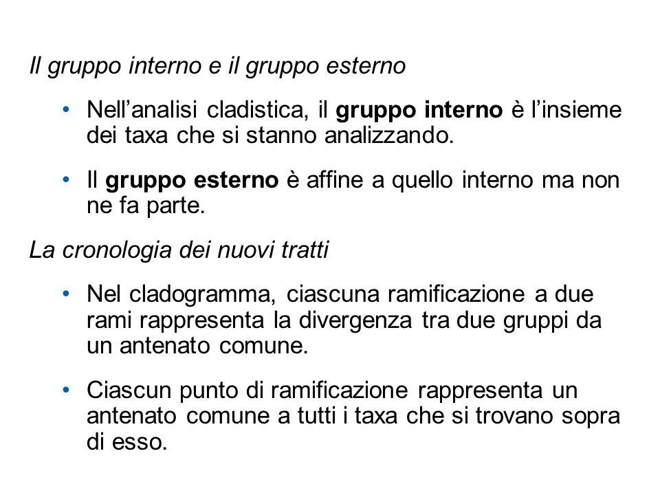 Il gruppo interno e il gruppo esterno Nellanalisi cladistica, il gruppo interno è linsieme dei taxa che si stanno analizzando. Il gruppo esterno è aff