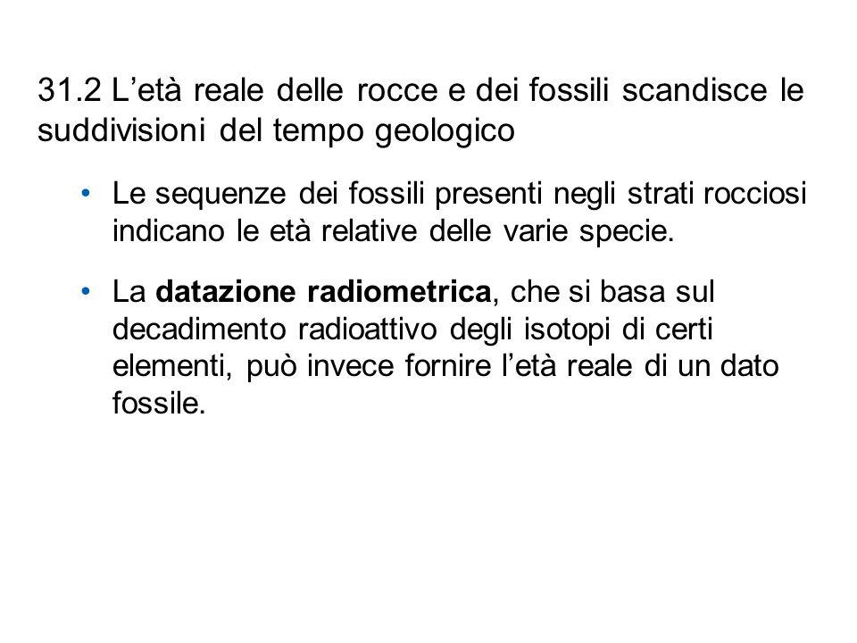 31.2 Letà reale delle rocce e dei fossili scandisce le suddivisioni del tempo geologico Le sequenze dei fossili presenti negli strati rocciosi indican