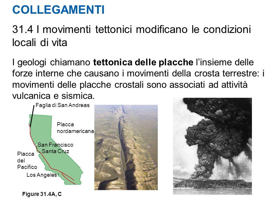 COLLEGAMENTI 31.4 I movimenti tettonici modificano le condizioni locali di vita I geologi chiamano tettonica delle placche linsieme delle forze intern