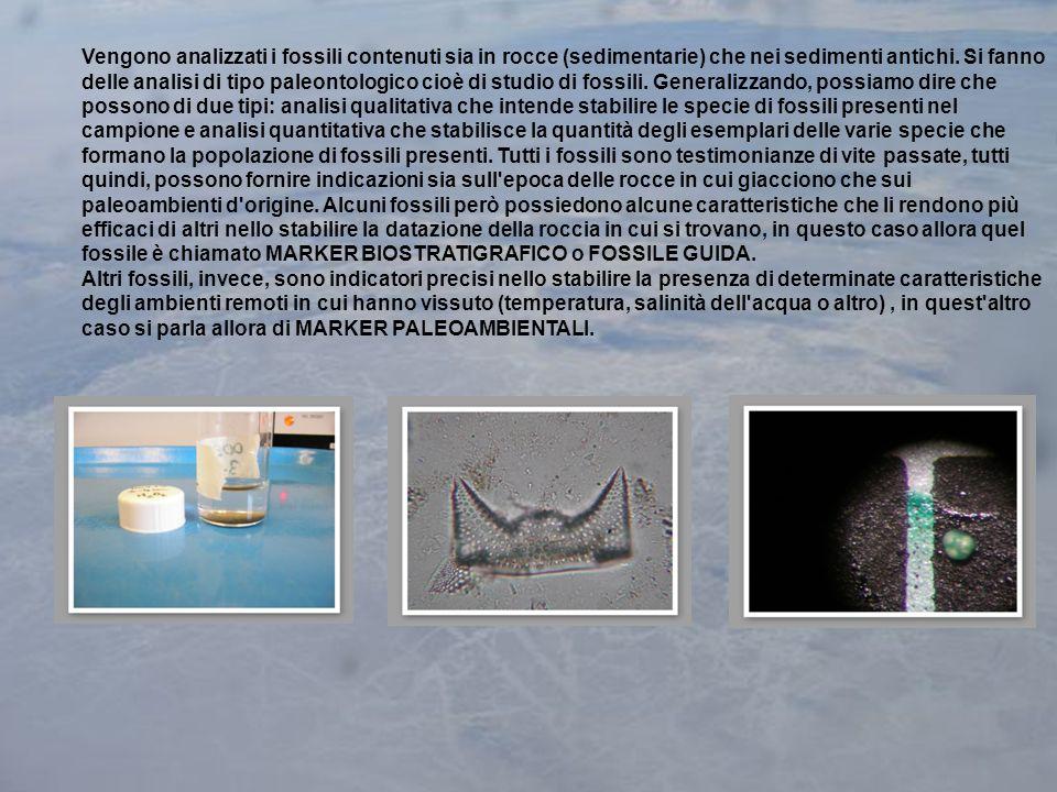 Vengono analizzati i fossili contenuti sia in rocce (sedimentarie) che nei sedimenti antichi.