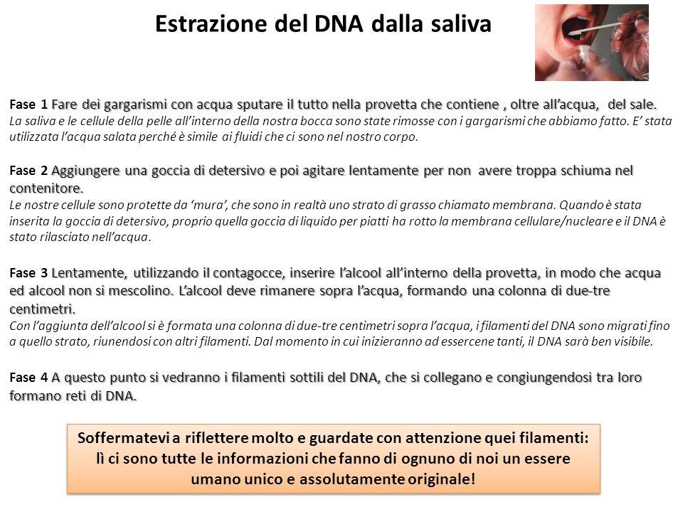 Estrazione del DNA dalla saliva Fare dei gargarismi con acqua sputare il tutto nella provetta che contiene, oltre allacqua, del sale. Fase 1 Fare dei