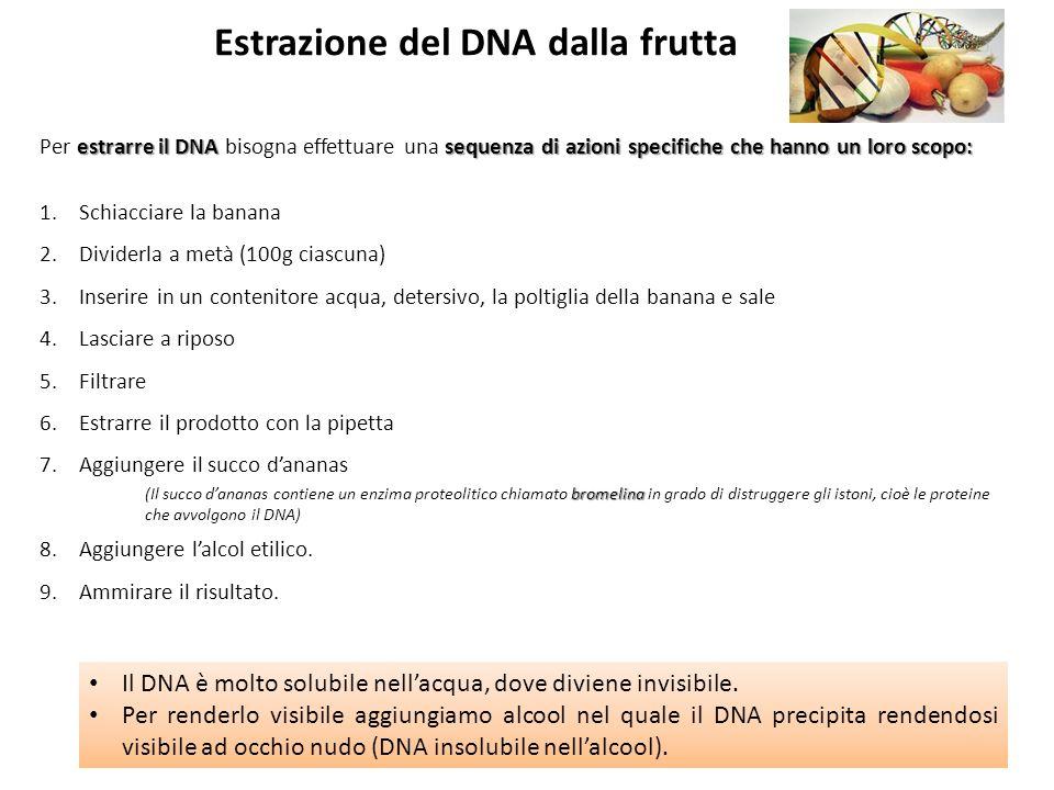 estrarre il DNA sequenza di azioni specifiche che hanno un loro scopo: Per estrarre il DNA bisogna effettuare una sequenza di azioni specifiche che ha
