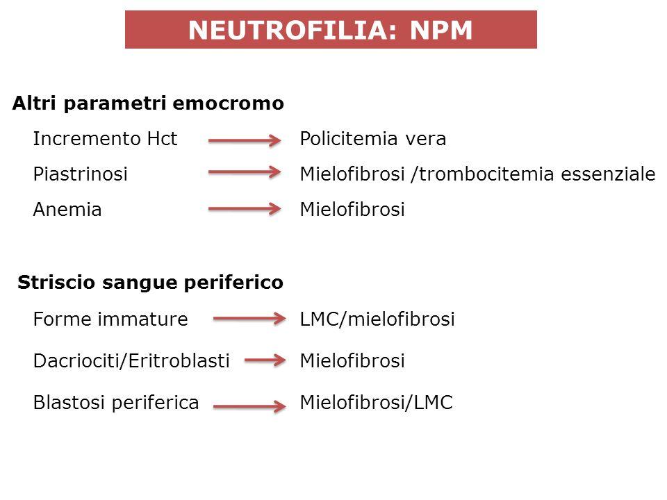 NEUTROFILIA: NPM Incremento Hct Policitemia vera PiastrinosiMielofibrosi /trombocitemia essenziale Forme immatureLMC/mielofibrosi Altri parametri emocromo AnemiaMielofibrosi Striscio sangue periferico Dacriociti/EritroblastiMielofibrosi Blastosi perifericaMielofibrosi/LMC