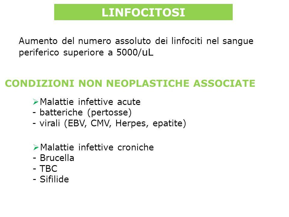 LINFOCITOSI Malattie infettive acute - batteriche (pertosse) - virali (EBV, CMV, Herpes, epatite) Malattie infettive croniche - Brucella - TBC - Sifilide CONDIZIONI NON NEOPLASTICHE ASSOCIATE Aumento del numero assoluto dei linfociti nel sangue periferico superiore a 5000/ uL
