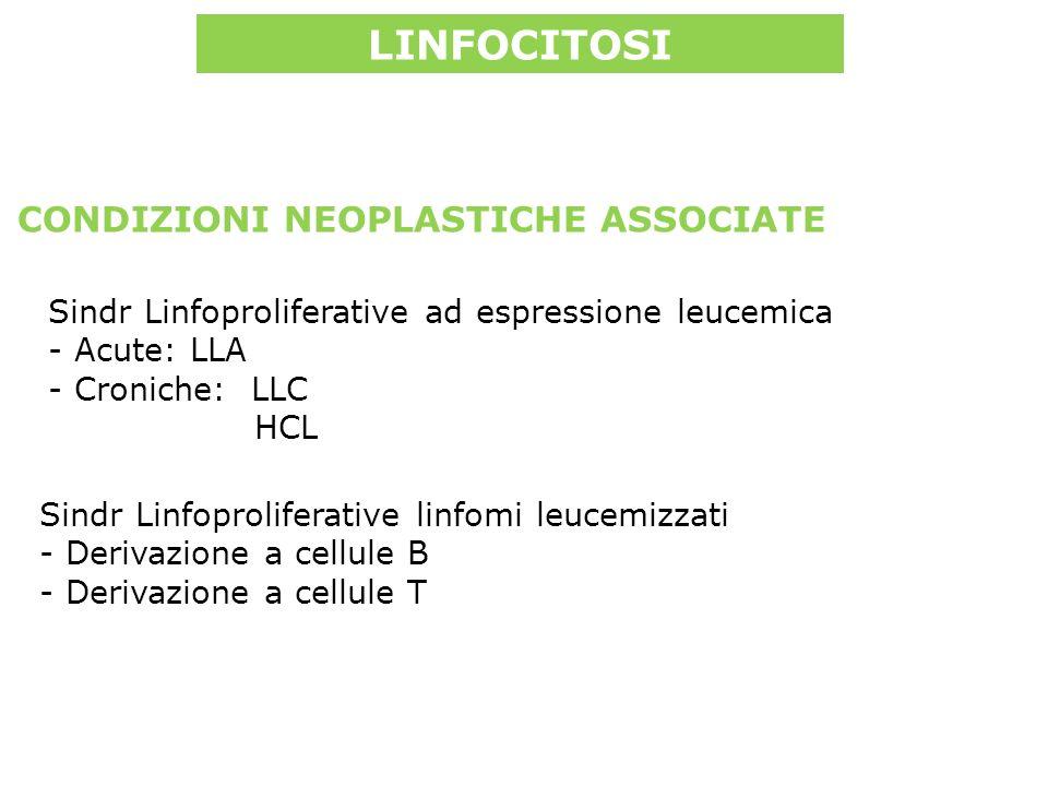 Sindr Linfoproliferative ad espressione leucemica - Acute: LLA - Croniche: LLC HCL LINFOCITOSI CONDIZIONI NEOPLASTICHE ASSOCIATE Sindr Linfoproliferative linfomi leucemizzati - Derivazione a cellule B - Derivazione a cellule T