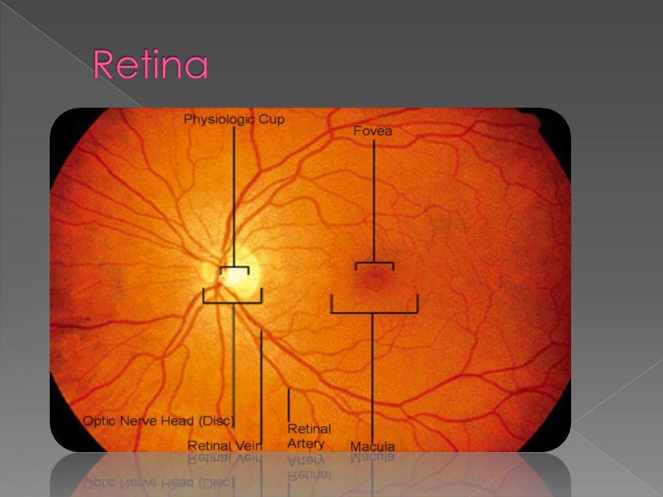 È consigliabile dunque, per le persone a rischio, cioè i soggetti affetti da drusen, degenerazione maculare senile incipiente o evoluta, proteggere gli occhi con lenti filtranti adatte.