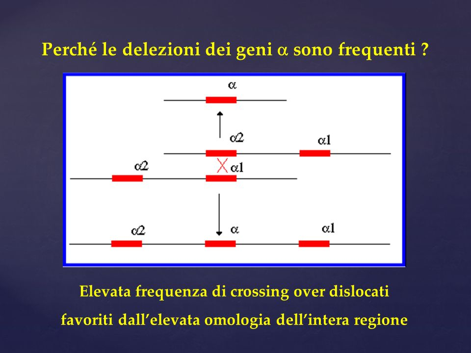 Perché le delezioni dei geni sono frequenti ? Elevata frequenza di crossing over dislocati favoriti dallelevata omologia dellintera regione