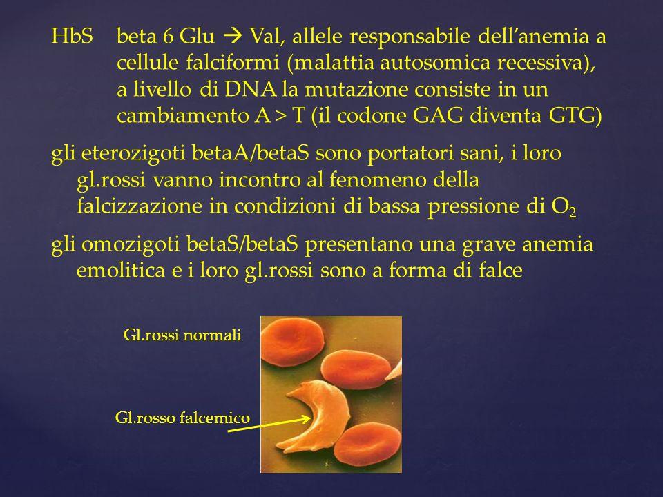 HbSbeta 6 Glu Val, allele responsabile dellanemia a cellule falciformi (malattia autosomica recessiva), a livello di DNA la mutazione consiste in un c
