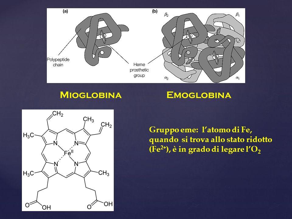 MioglobinaEmoglobina Gruppo eme: latomo di Fe, quando si trova allo stato ridotto (Fe 2+ ), è in grado di legare lO 2