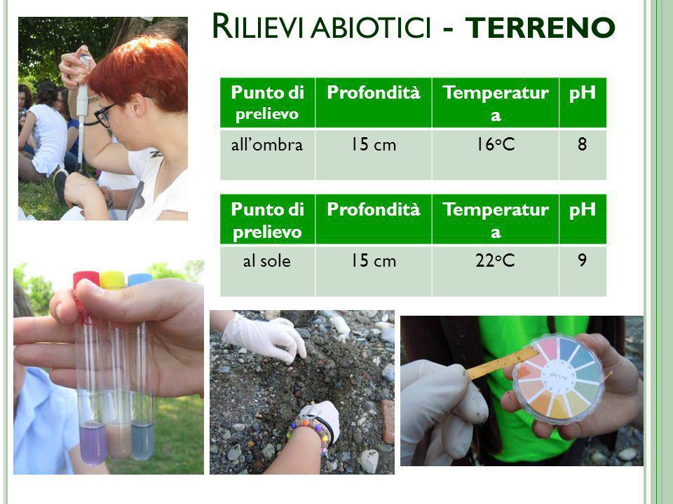 R ILIEVI ABIOTICI - TERRENO Punto di prelievo ProfonditàTemperatur a pH al sole15 cm22 o C9 Punto di prelievo ProfonditàTemperatur a pH allombra15 cm16 o C8