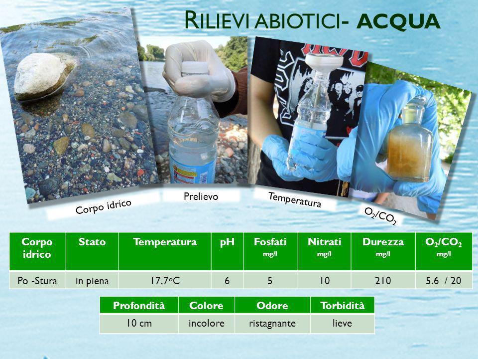 ProfonditàColoreOdoreTorbidità 15 cmincoloreristagnanteassente Corpo idrico StatoTemperaturapHFosfati mg/l Nitrati mg/l Durezza mg/l O 2 /CO 2 mg/l fi