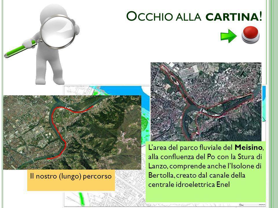 O CCHIO ALLA CARTINA ! Larea del parco fluviale del Meisino, alla confluenza del Po con la Stura di Lanzo, comprende anche lIsolone di Bertolla, creat
