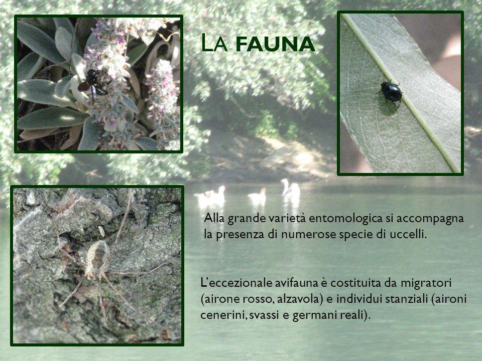 L A FAUNA Alla grande varietà entomologica si accompagna la presenza di numerose specie di uccelli.