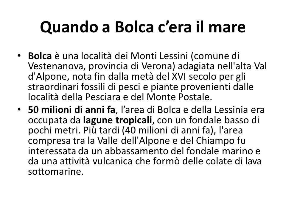 Quando a Bolca cera il mare Bolca è una località dei Monti Lessini (comune di Vestenanova, provincia di Verona) adagiata nell'alta Val d'Alpone, nota