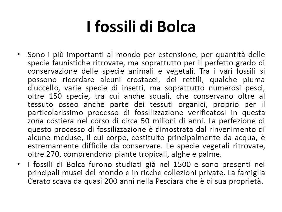 I fossili di Bolca Sono i più importanti al mondo per estensione, per quantità delle specie faunistiche ritrovate, ma soprattutto per il perfetto grad