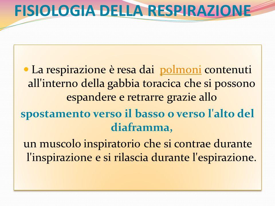 FISIOLOGIA DELLA RESPIRAZIONE La respirazione è resa dai polmoni contenuti all'interno della gabbia toracica che si possono espandere e retrarre grazi