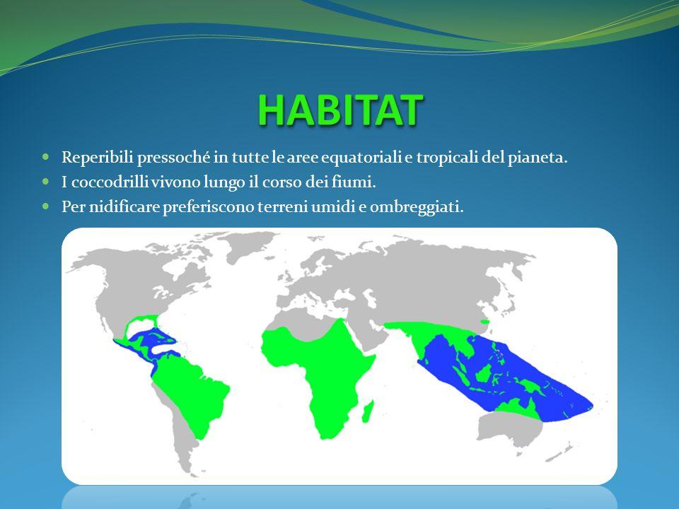 Reperibili pressoché in tutte le aree equatoriali e tropicali del pianeta. I coccodrilli vivono lungo il corso dei fiumi. Per nidificare preferiscono