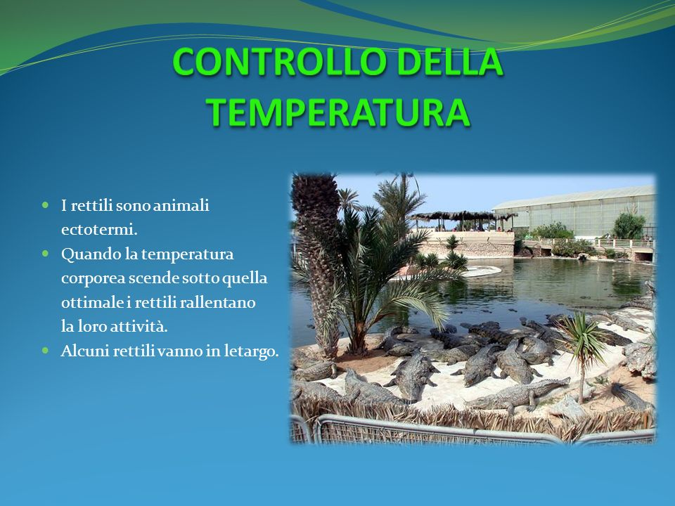I rettili sono animali ectotermi. Quando la temperatura corporea scende sotto quella ottimale i rettili rallentano la loro attività. Alcuni rettili va