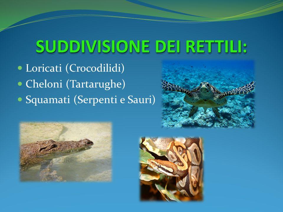 Loricati (Crocodilidi) Cheloni (Tartarughe) Squamati (Serpenti e Sauri)
