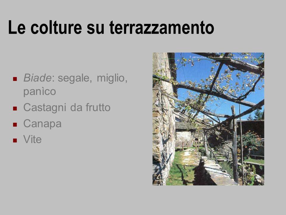 Le colture su terrazzamento Biade: segale, miglio, panìco Castagni da frutto Canapa Vite