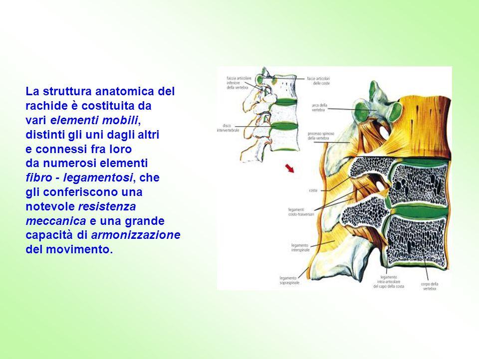 La struttura anatomica del rachide è costituita da vari elementi mobili, distinti gli uni dagli altri e connessi fra loro da numerosi elementi fibro -