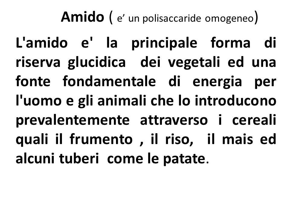 Amido ( e un polisaccaride omogeneo ) L'amido e' la principale forma di riserva glucidica dei vegetali ed una fonte fondamentale di energia per l'uomo