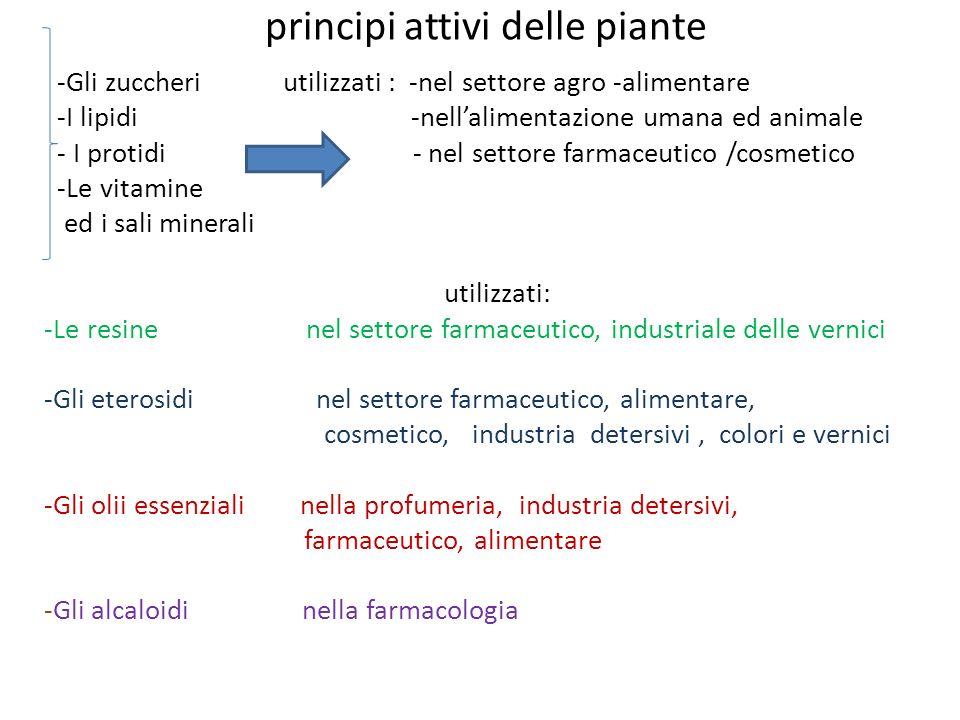 principi attivi delle piante -Gli zuccheri utilizzati : -nel settore agro -alimentare -I lipidi -nellalimentazione umana ed animale - I protidi - nel