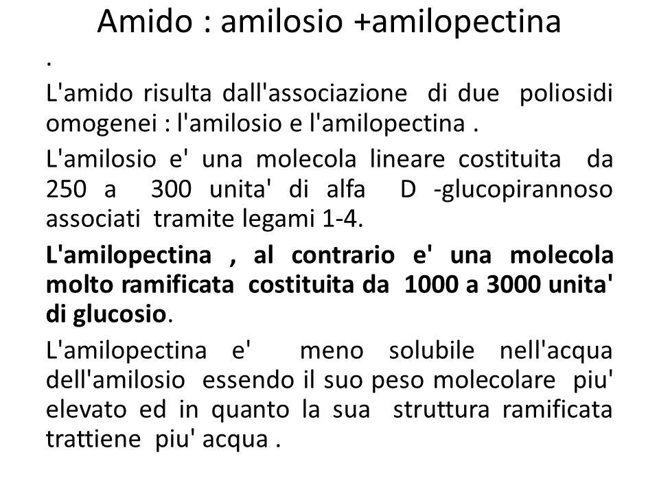 Amido : amilosio +amilopectina. L'amido risulta dall'associazione di due poliosidi omogenei : l'amilosio e l'amilopectina. L'amilosio e' una molecola