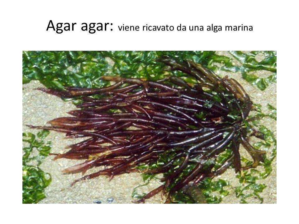 Agar agar: viene ricavato da una alga marina