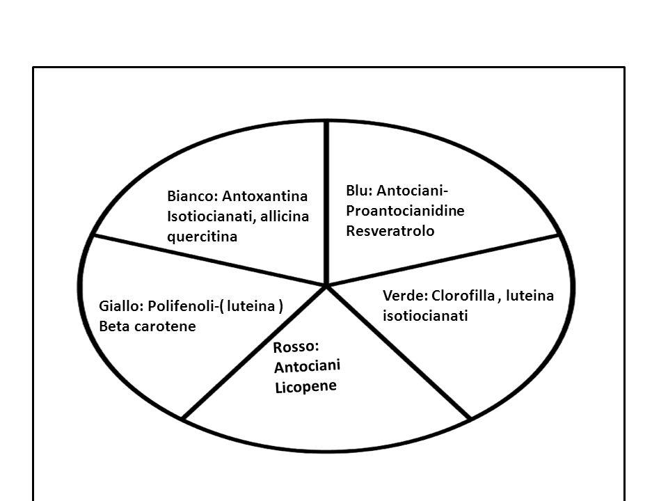 Blu: Antociani- Proantocianidine Resveratrolo Verde: Clorofilla, luteina isotiocianati Rosso: Antociani Licopene Giallo: Polifenoli-( luteina ) Beta c