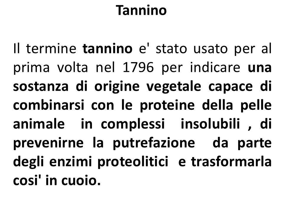 Tannino Il termine tannino e' stato usato per al prima volta nel 1796 per indicare una sostanza di origine vegetale capace di combinarsi con le protei