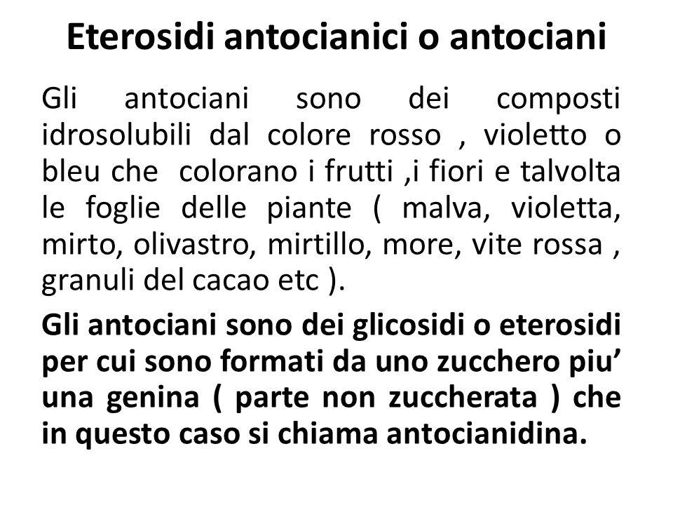 Eterosidi antocianici o antociani Gli antociani sono dei composti idrosolubili dal colore rosso, violetto o bleu che colorano i frutti,i fiori e talvo