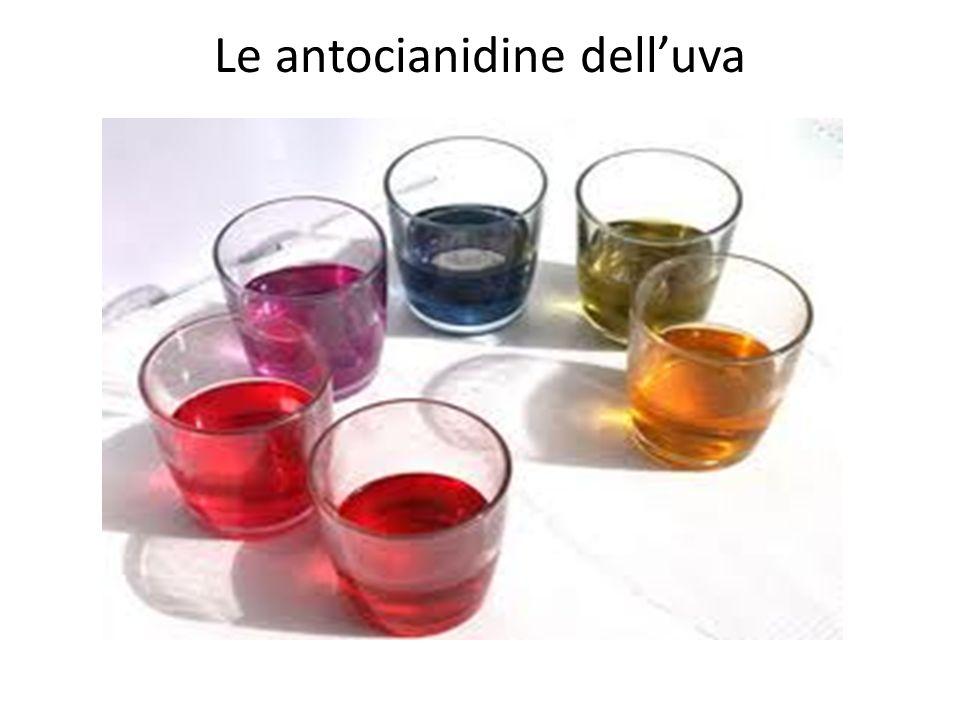 Le antocianidine delluva