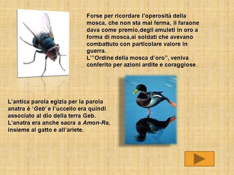 Forse per ricordare l'operosità della mosca, che non sta mai ferma, il faraone dava come premio,degli amuleti in oro a forma di mosca,ai soldati che a