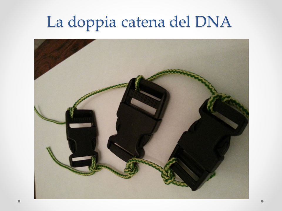 La doppia catena del DNA