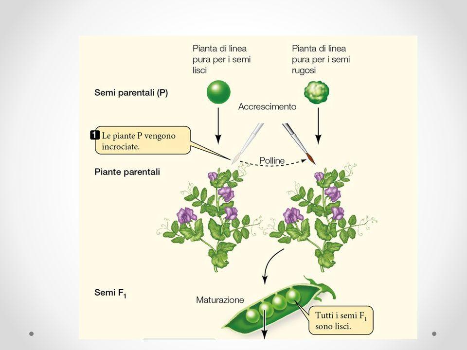 Una proteina: una catena di amminoacidi