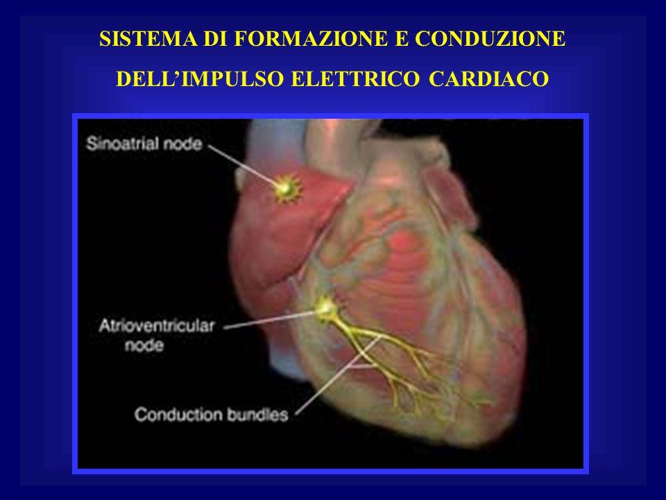 SISTEMA DI FORMAZIONE E CONDUZIONE DELLIMPULSO ELETTRICO CARDIACO