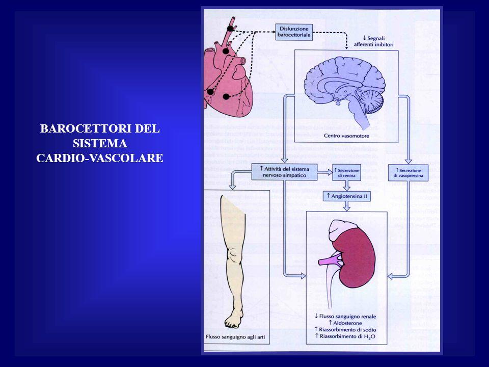 BAROCETTORI DEL SISTEMA CARDIO-VASCOLARE