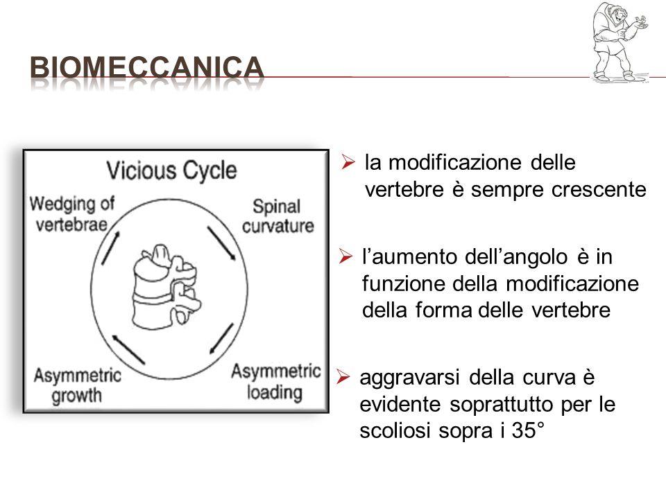 la modificazione delle vertebre è sempre crescente laumento dellangolo è in funzione della modificazione della forma delle vertebre aggravarsi della c
