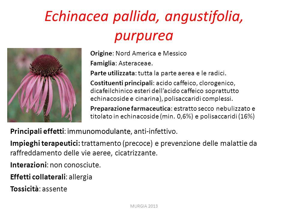 Origine: Nord America e Messico Famiglia: Asteraceae. Parte utilizzata: tutta la parte aerea e le radici. Costituenti principali: acido caffeico, clor