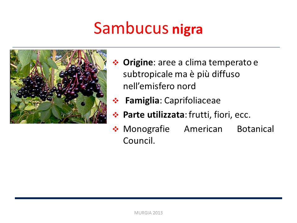 Sambucus nigra Origine: aree a clima temperato e subtropicale ma è più diffuso nellemisfero nord Famiglia: Caprifoliaceae Parte utilizzata: frutti, fi