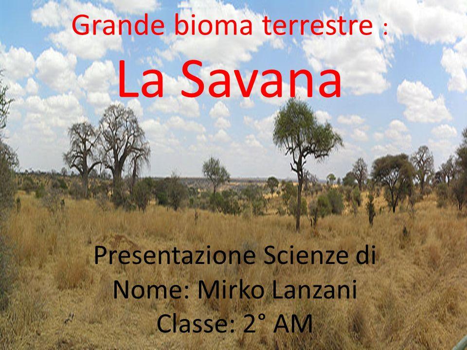 Le Caratteristiche La savana è un bioma terrestre soprattutto tropicale e subtropicale, caratterizzato da una vegetazione a prevalenza erbosa, con arbusti e alberi abbastanza distanziati da non dar luogo a una volta chiusa.